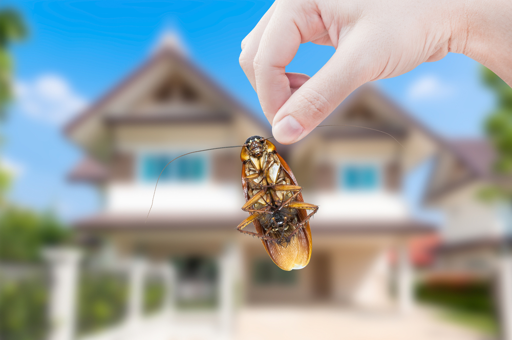 April Is National Pest Management Month