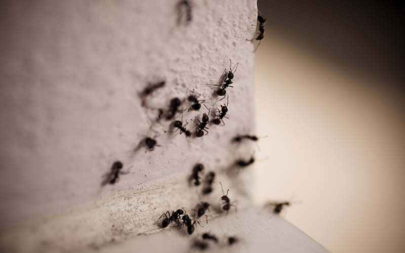 5 Important Tips for Keeping Ants Out of Your Home