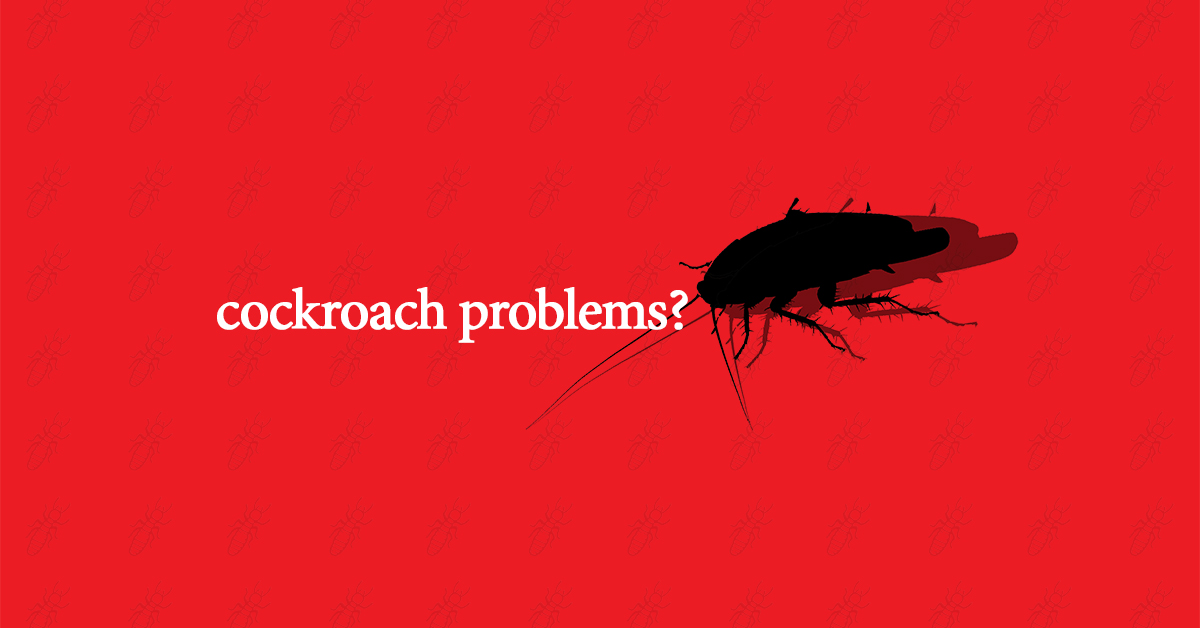 Why Are Cockroaches So Hard To Kill: Cockroach Control