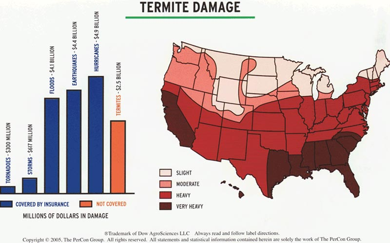 Termite Control in North Carolina